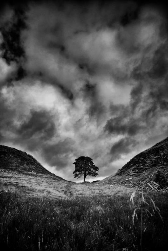 Sycamore Gap © Rory Garforth